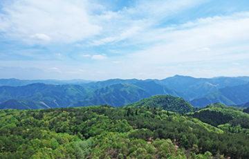 杉ヶ沢高原