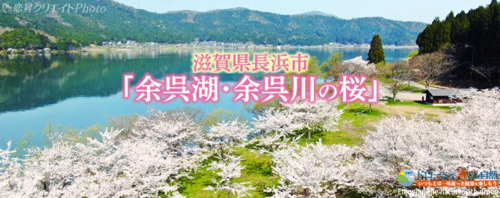 滋賀県長浜市「余呉の桜」