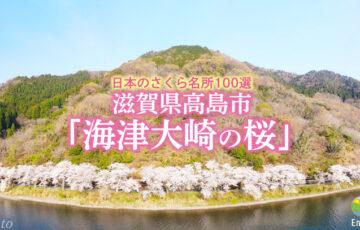 滋賀県高島市「海津大崎の桜」