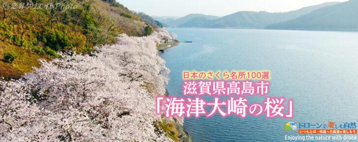 滋賀県高島市「海津大崎の桜」/空撮